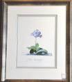 Georg Dionysius Ehret - Auricula Fille Amoureuse Special Edition Print - V & A Museum (Framed) 1