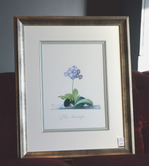 Georg Dionysius Ehret - Auricula Fille Amoureuse Special Edition Print - V & A Museum (Framed) 2