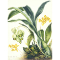 Botanical Art Prints at Kings Carpets & Interiors Nottingham