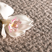 Adam Carpets Artistry at Kings of Nottingham for the best fitted prices on all Adam Carpets.