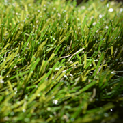 Artificial Grass at Kings of Nottingham the flooring specialists.